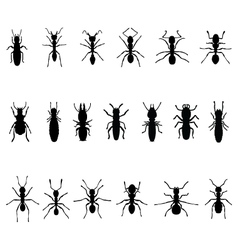 Ants and termites vector