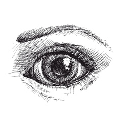 Black and white drawing of eye vector image