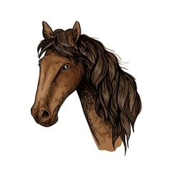 Brown racehorse sketch for horse racing design vector image