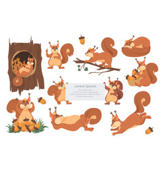 cute squirrel cartoon character set flat vector image