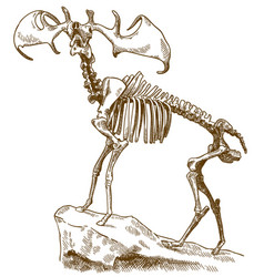 engraving of megaloceros deer skeleton vector image