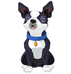Howling Boston Terrier vector