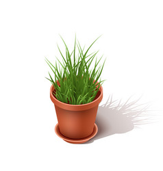 isolated ceramic flowerpot with a grass isometric vector image vector image