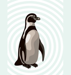 African penguin on abstract background vector