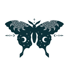 Mystical celestial butterfly isolated witchy vector