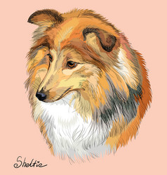 Sheltie colorful hand drawing portrait vector
