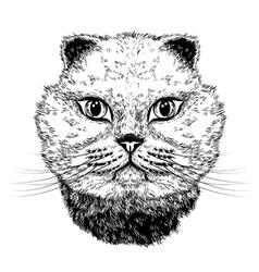 Cat portrait vector image