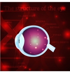 Eye structure red vector
