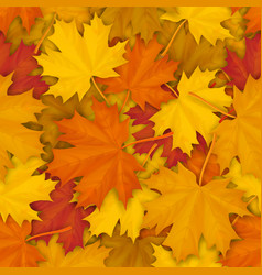 fallen maple leaves pattern vector image