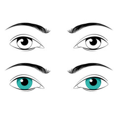 male eyes with eyebrows vector image