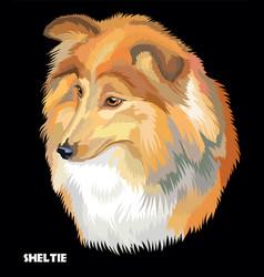 sheltie colorful portrait vector image