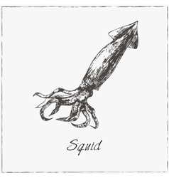 Squid Hand drawn sketch Collection of seafood vector image