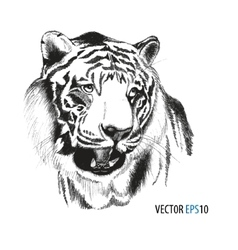 Tiger head hand drawn vector