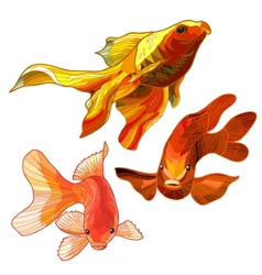 Set of Gold Fish vector image