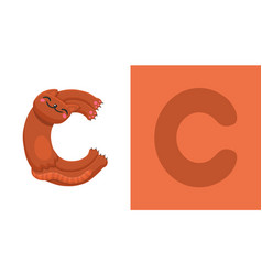 c is for cat letter c cat cute vector image