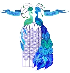 Couple peacocks Ribbon with text Blue design vector image
