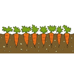 a bed of carrot vector image
