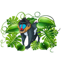 Baboon in green leaves vector