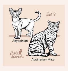 Cat breeds - abyssinian australian mist vector