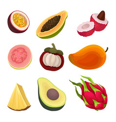 colorful flat set of exotic fruits natural vector image