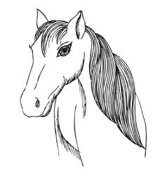 Hand drawn horse with long mane and bang vector