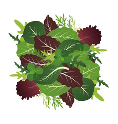 Mix of salad leaves arugula spinach and lettuce vector