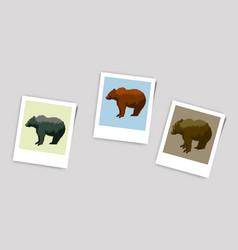 Polaroid photo of bears vector
