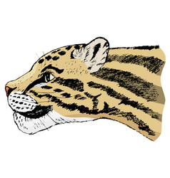 sketch of clouded leopard vector image vector image