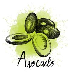 avocado in hand drawn graphics vector image