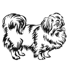 Decorative standing portrait of dog pekingese vector