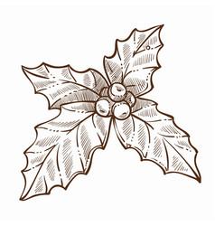 mistletoe traditional plant on christmas vector image