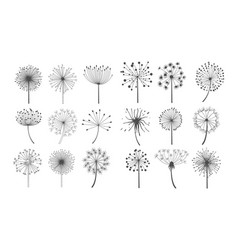 Dandelion flowers with fluffy seeds set floral vector