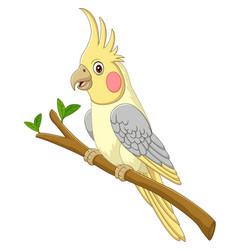Cartoon yellow cockatiels sitting on a tree branch vector