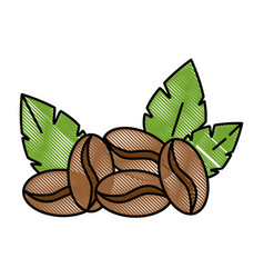coffee seeds with leafs vector image