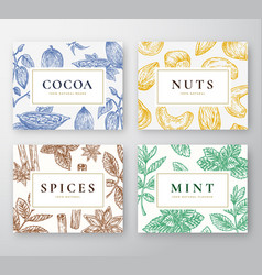 Hand drawn cocoa beans mint nuts and spices vector
