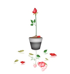 Beautiful Red Rose in Ceramic Flower Pot vector image