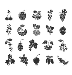 Berries silhouettes icons vector