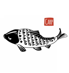 Carp black and white vector