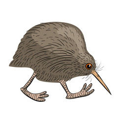 Cartoon image of kiwi bird vector