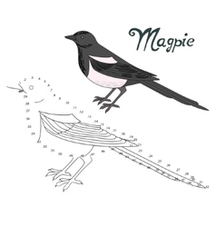 Educational game connect dots to draw magpie bird vector