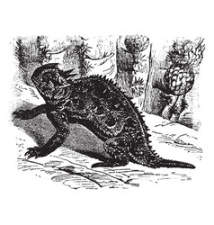 California horned toad vintage vector