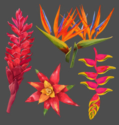 Exotic flowers and leaves set floral elements vector