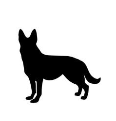 Black silhouette of german shepherd dog standig vector