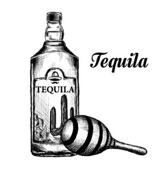 Bottle of tequila with lime and glass painted vector