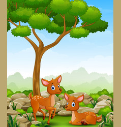 Cartoon two deer in the jungle vector