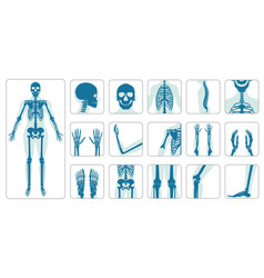 Human bones orthopedic and skeleton icon set vector
