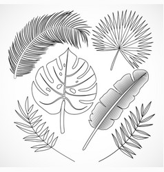 Palm leaves silhouette set outline vector