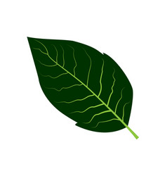 Tobacco leaf vector