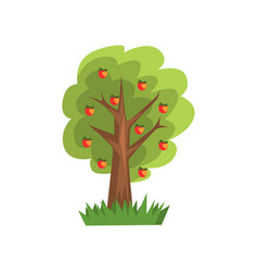 apple tree on a white vector image