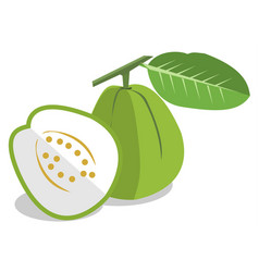 Green guava on white background vector